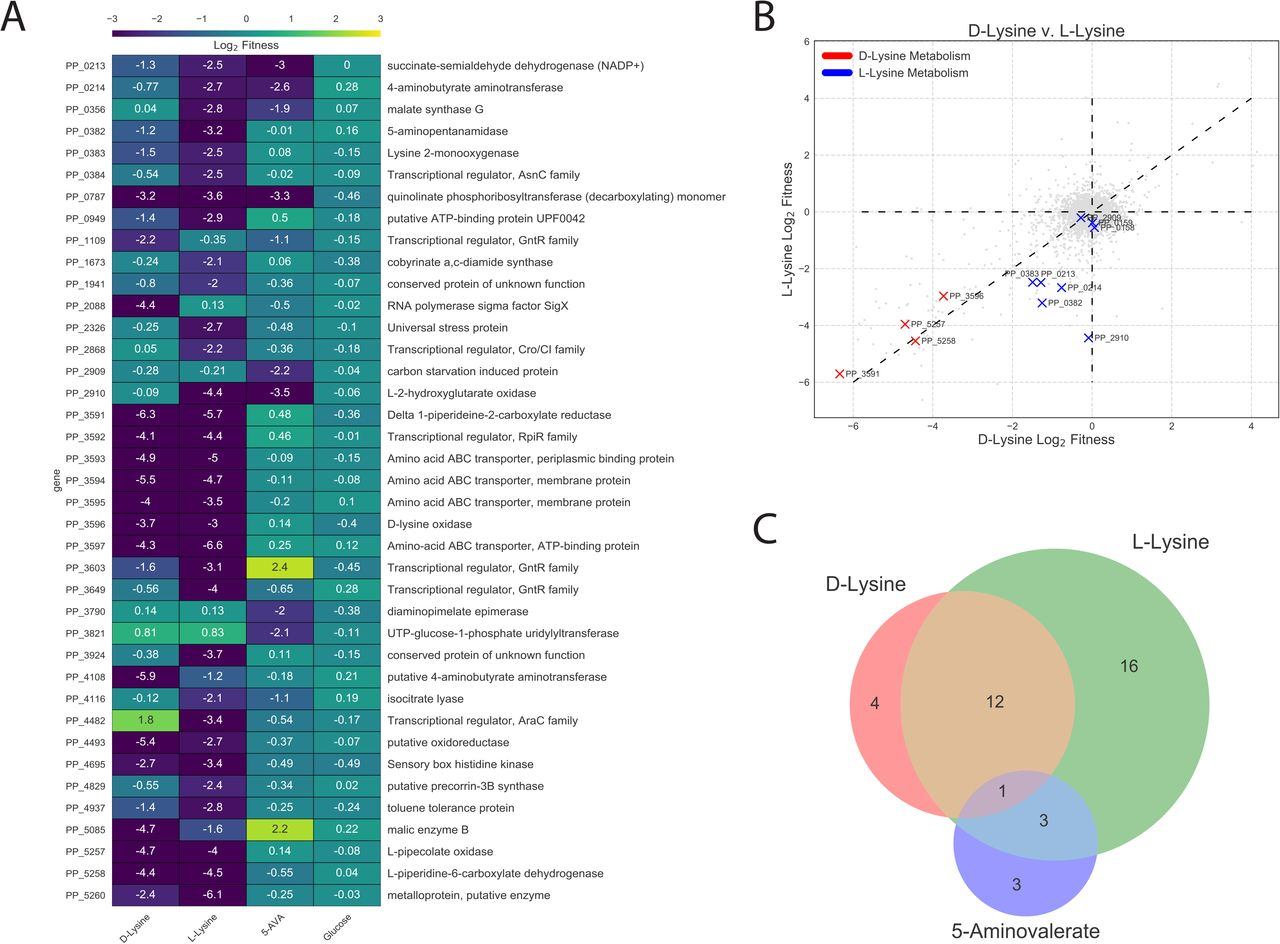 Massively parallel fitness profiling reveals multiple novel enzymes