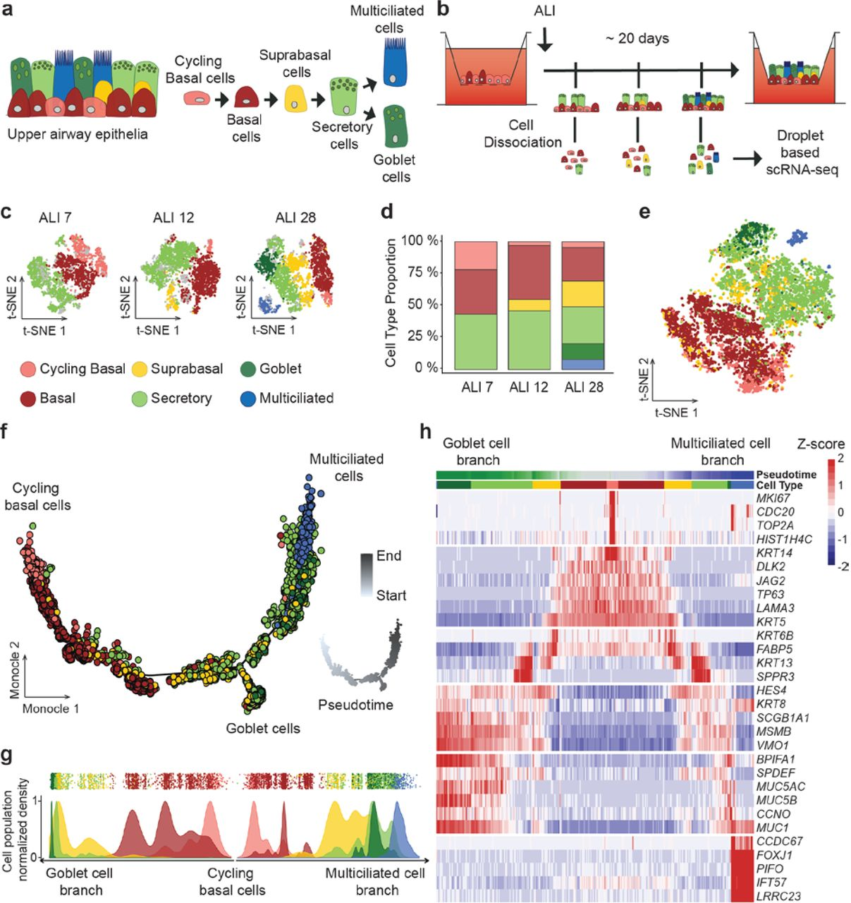 Single-cell RNA sequencing reveals novel cell