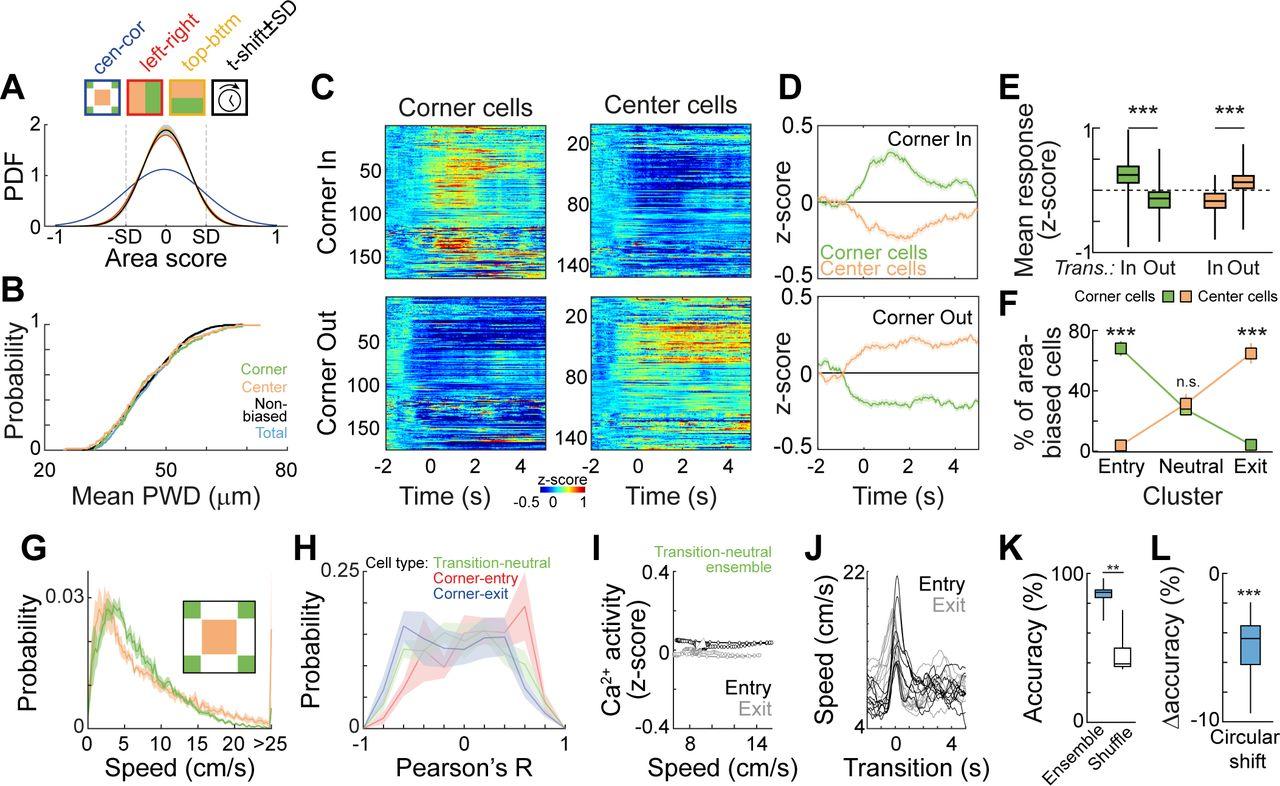 Amygdala neuronal ensembles dynamically encode behavioral states