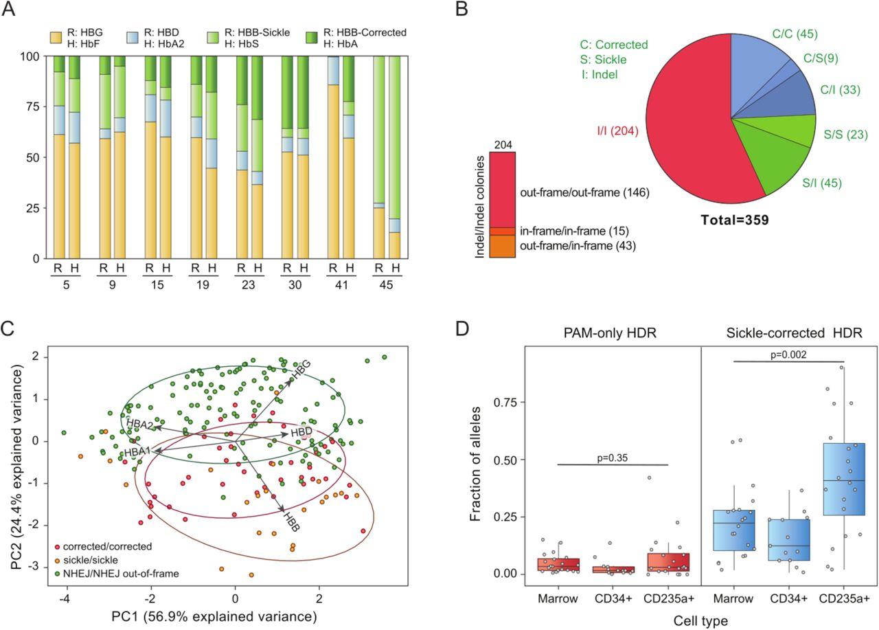 In vivo selection for corrected ß-globin alleles after CRISPR/Cas9