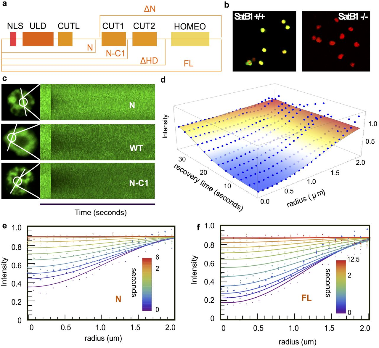 Satb1integrates DNA sequence,shape, motif densityand torsional