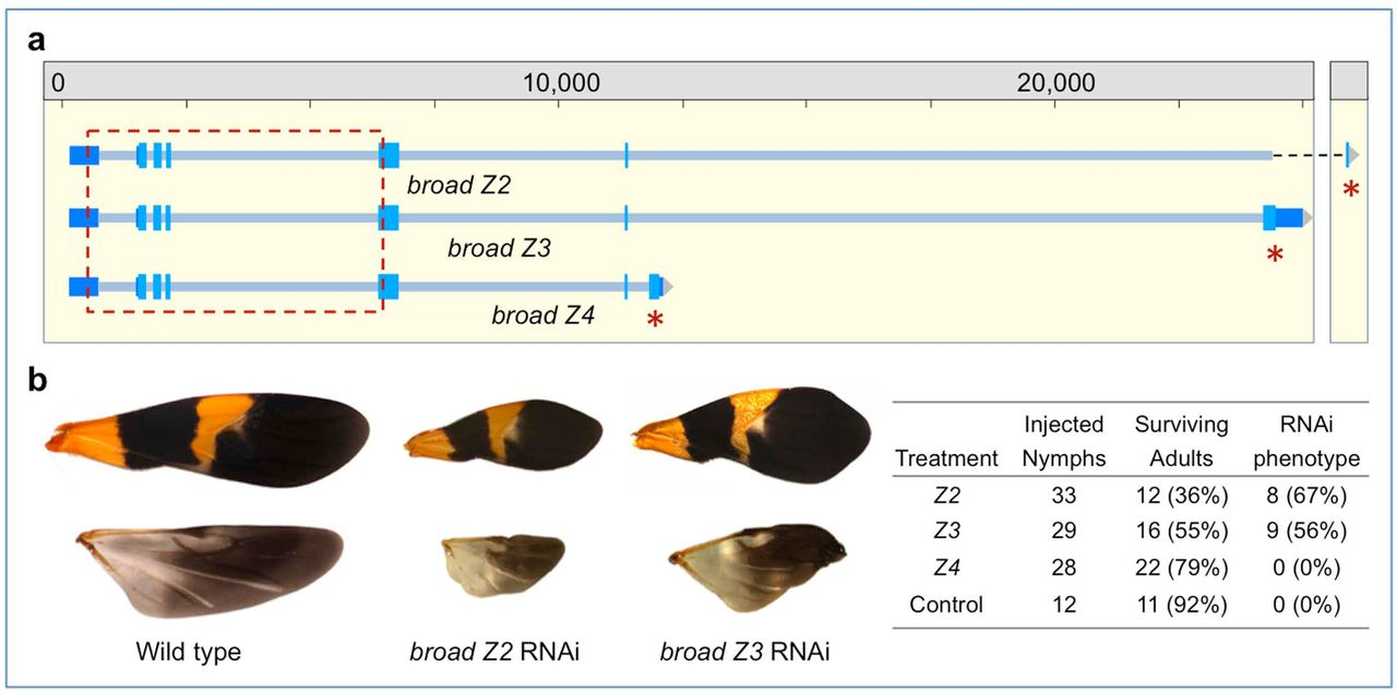 Molecular evolutionary trends and feeding ecology