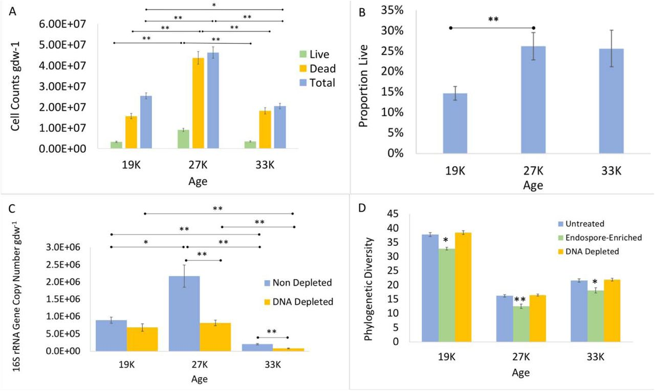 Changes in the Active, Dead, and Dormant Microbial Community