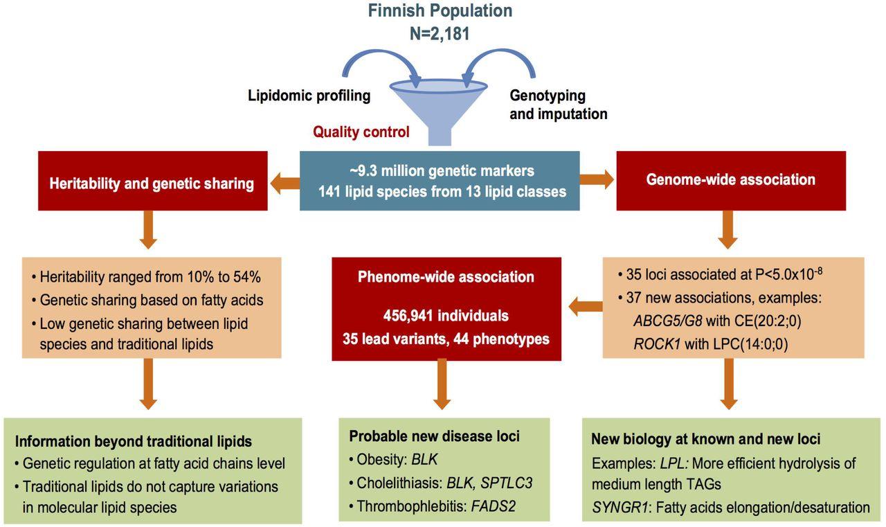 ap biology molecular genetics activity 2 answer key