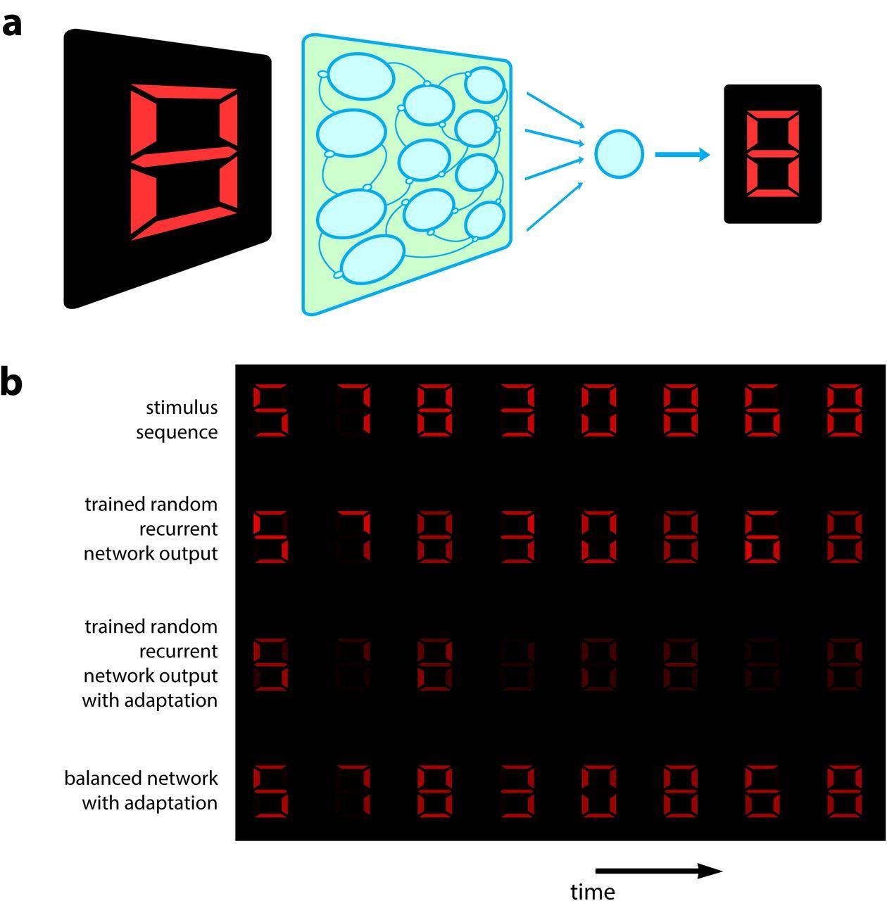 Population adaptation in efficient balanced networks   bioRxiv