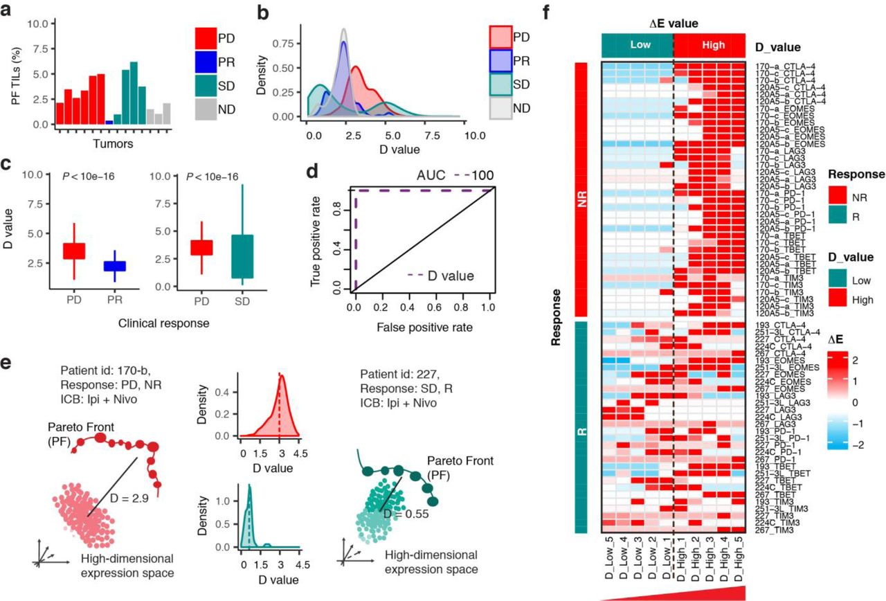 Single-Cell Modeling of CD8+ T Cell Exhaustion Predicts Response to