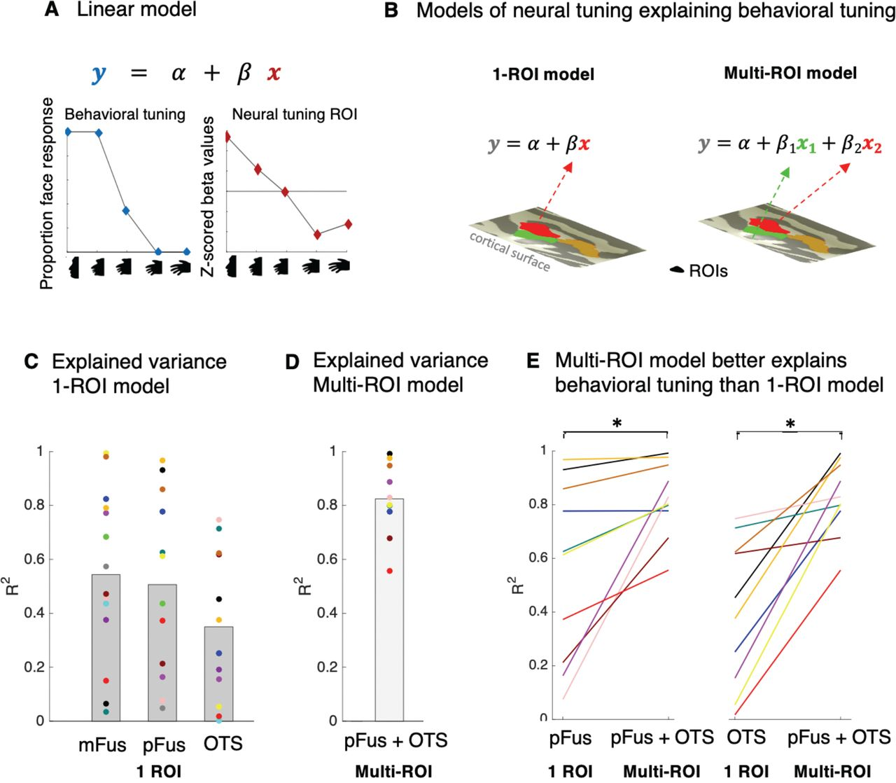 Modeling neural tuning in human ventral temporal cortex predicts the