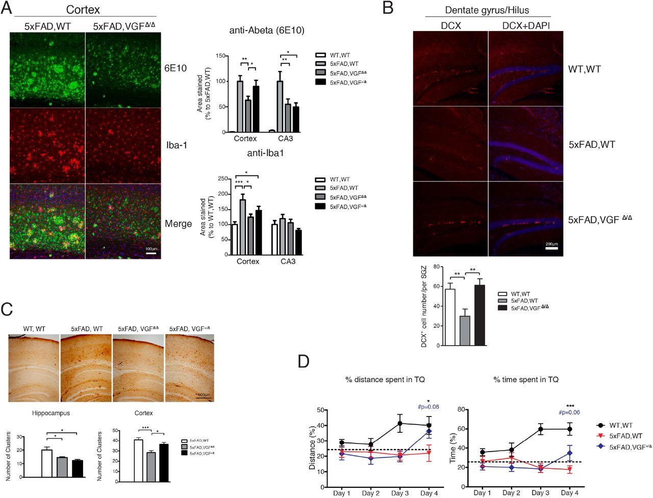 Multiscale causal network models of Alzheimer's disease