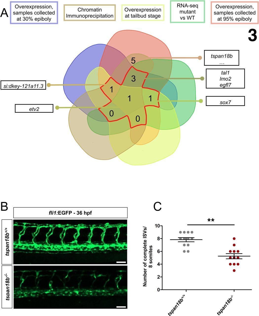 Genome-wide strategies reveal target genes of Npas4l