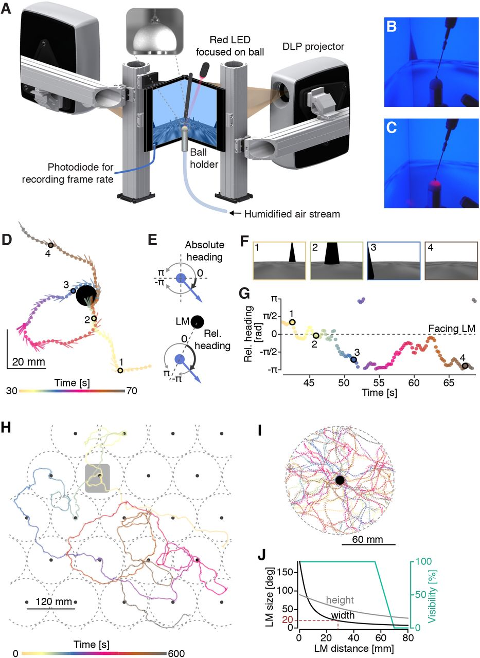 3cbc824d07e3 On the adaptive behavior of head-fixed flies navigating in two ...