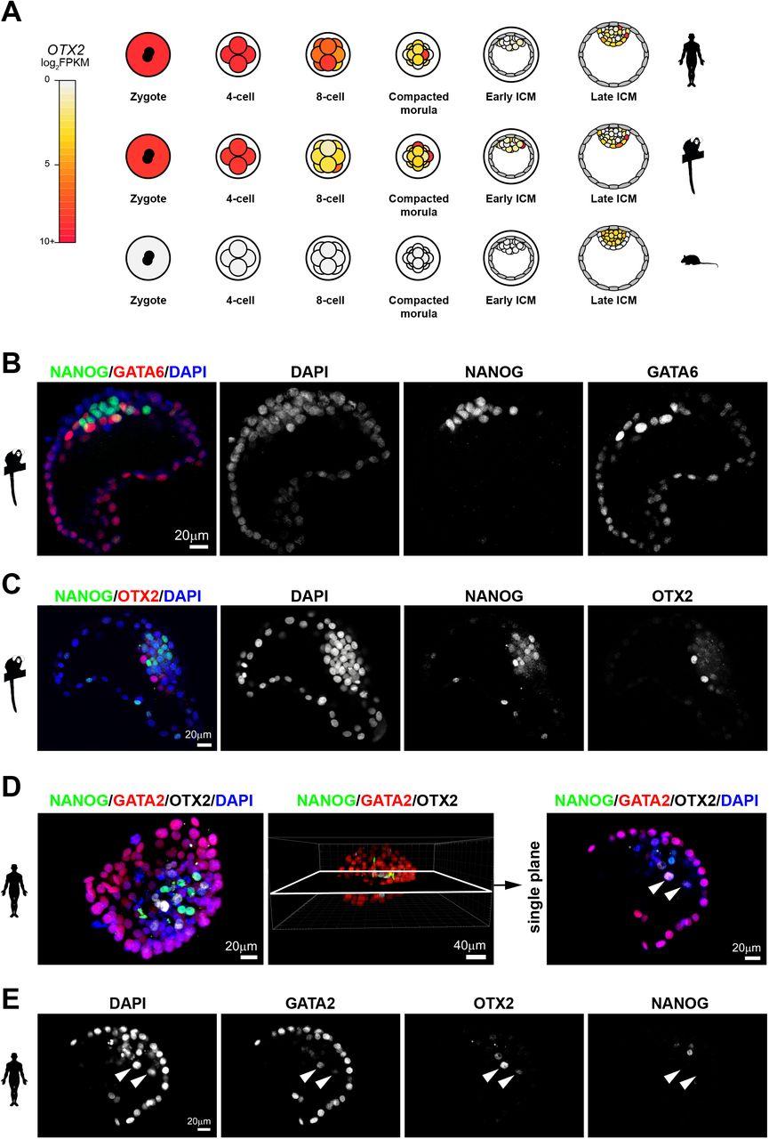 5ecb380f6d8 Single-cell transcriptome analysis of human