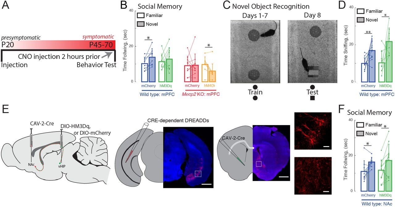 Ventral hippocampal projections to the medial prefrontal