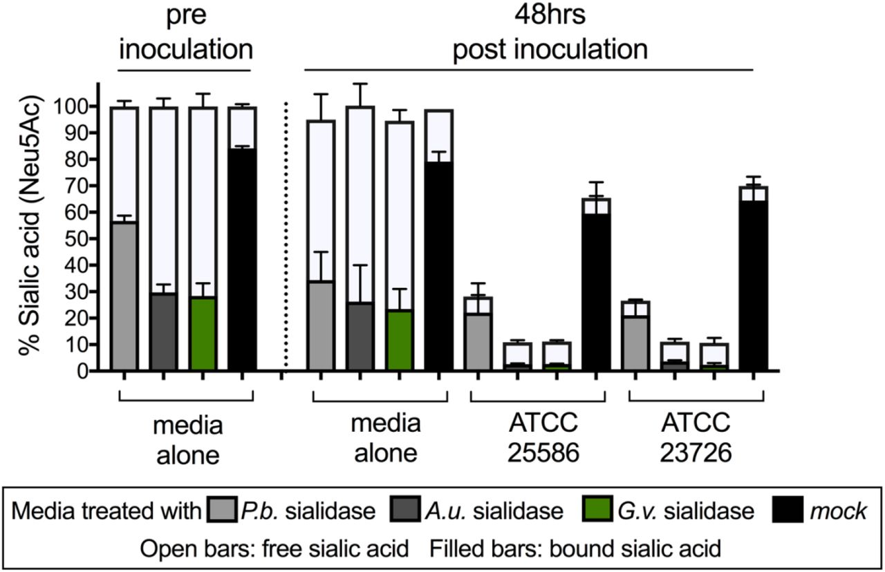 F. nucleatum ATCC23726 uptakes free sialic acid released by P. bivia sialidases, related to Figure 1 Relative amount of bound (bound = total-free) and free sialic acid remaining in the medium at 0 and 48 hours post inoculation. F. nucleatum was grown anaerobically in media that was either untreated or exposed to purified sialidase from Arthrobacter ureafaciens ( A.u. ) or P. bivia (P.b.) ATCC 29303. Bound sialic acids are inaccessible to F. nucleatum except in the presence of exogenous sialidase. Error bars represent standard deviation of the mean value.