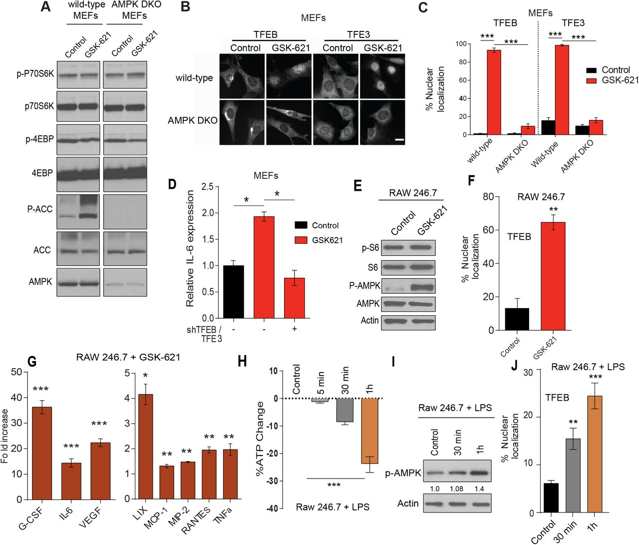 AMPK regulates TFEB/TFE3-mediated innate immune response (A) Immunoblot of wild-type or AMPKα1/α2 double knock out (DKO) MEFs stimulated with the AMPK activator; GSK-621 (30 μM) for 1 h. (B) Representative images of TFEB and TFE3 staining in wild-type and AMPK DKO MEFs before and after treatment with GSK-621 (30 μM) for 1 h. Scale bars represent 20 μm. (C) Quantification of the percentage of cells showing TFEB and TFE3 nuclear staining of the conditions described in (B). (D) Relative IL-6 mRNA levels measured by qRT-PCR in wild-type MEFs transfected with EV or shTFEB/TFE3, stimulated with GSK-621 for 2 h. Data represents the average of three independent experiments, each done in triplicates ± SEM. Significance was determined using one-way ANOVA with the application of Bonferroni correction ( * p
