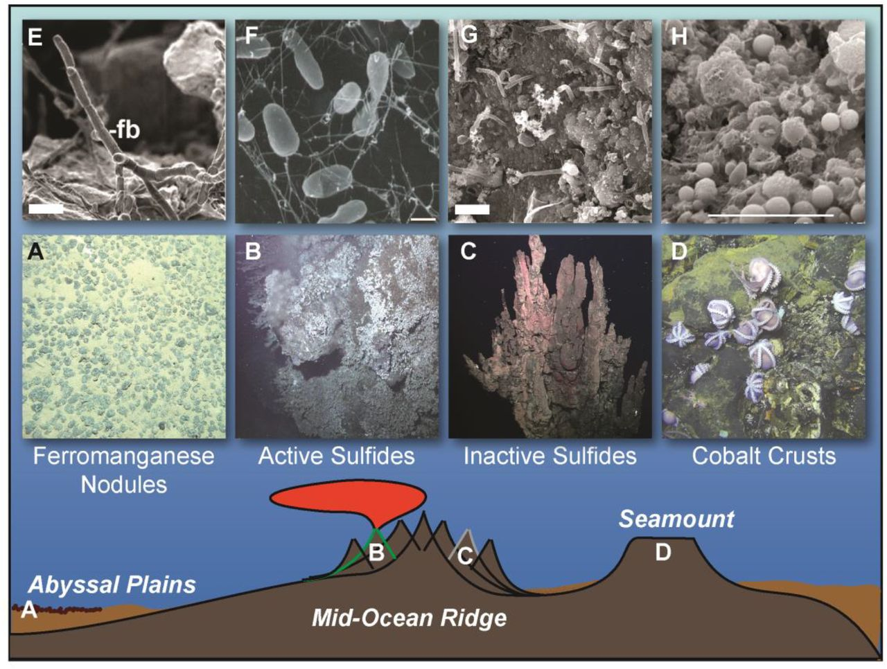 Impacts of Deep-Sea Mining on Microbial Ecosystem Services