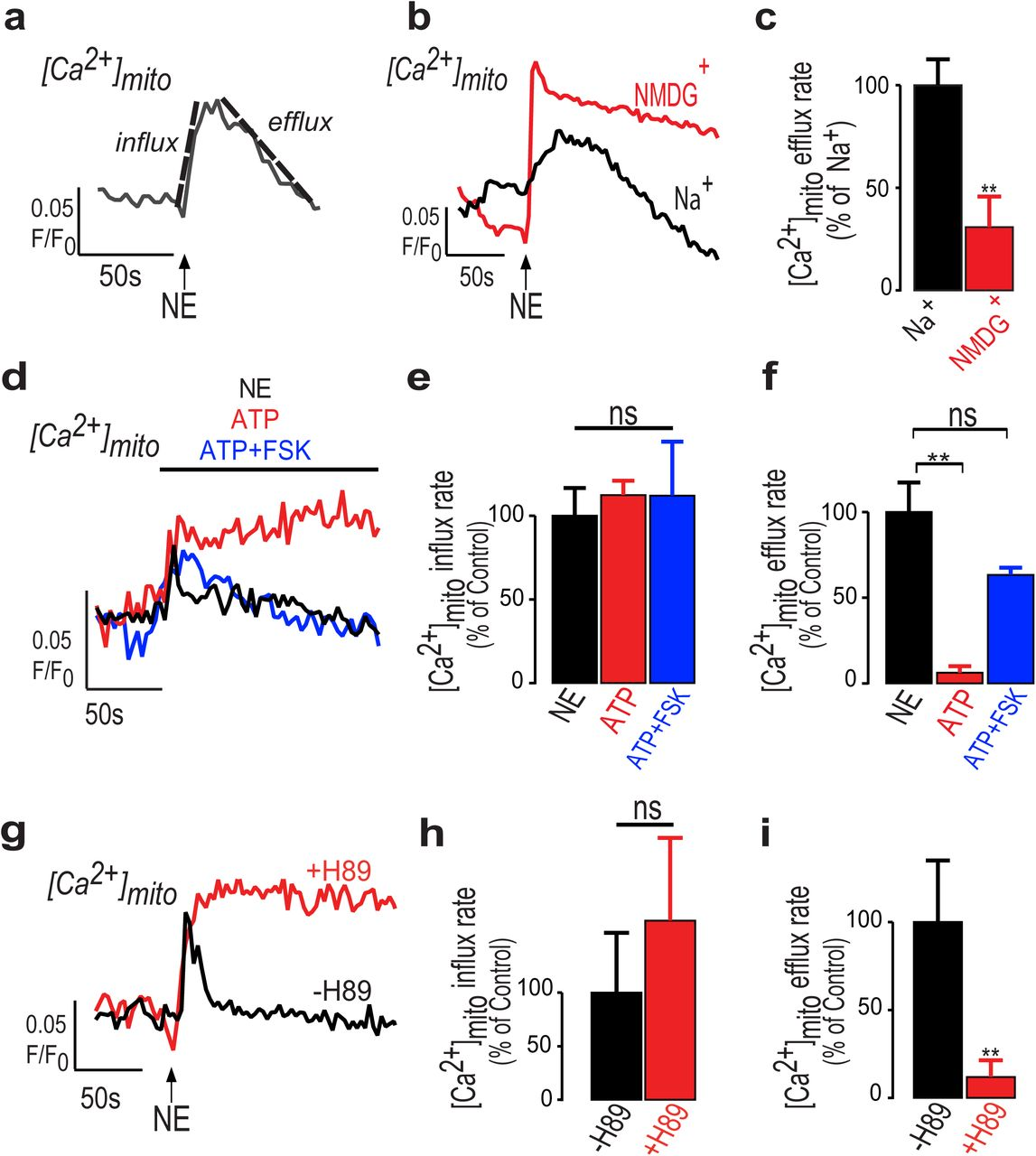 NCLX prevents cell death during adrenergic activation of the