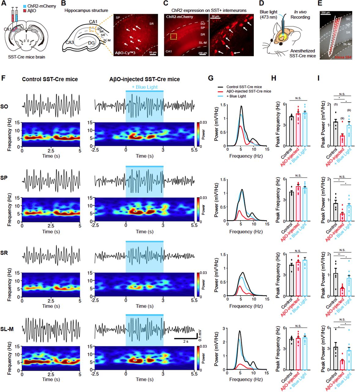 Optogenetic activation of SST-positive interneurons restores