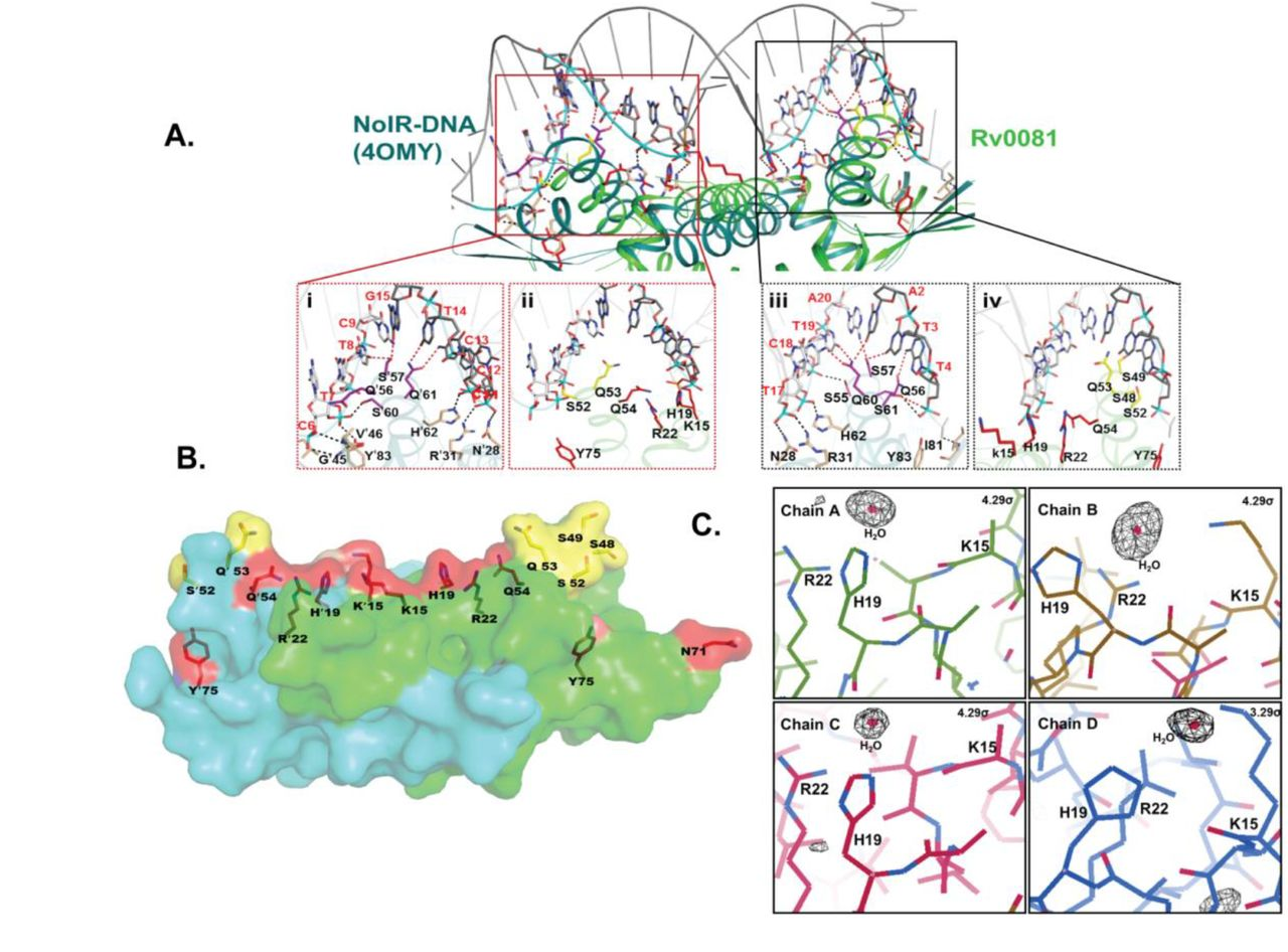 Structural basis of hypoxic gene regulation by the Rv0081