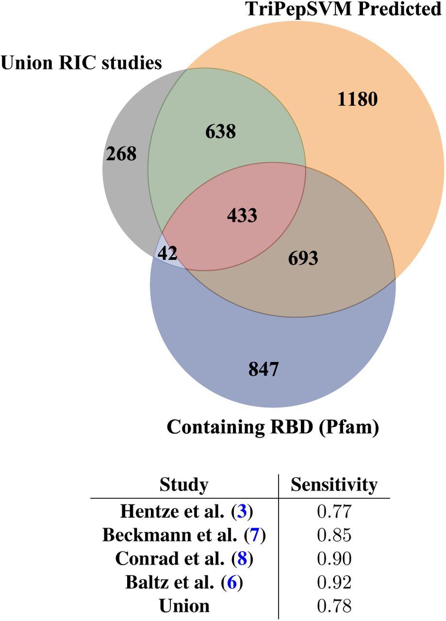 TriPepSVM - de novo prediction of RNA-binding proteins based