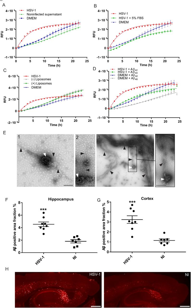 The Viral Protein Corona Directs Viral Pathogenesis and