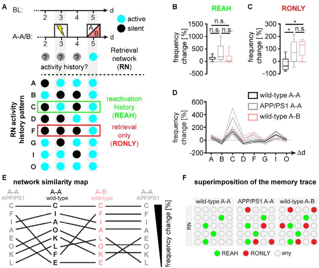 Memory trace superimposition impairs recall in a mouse model