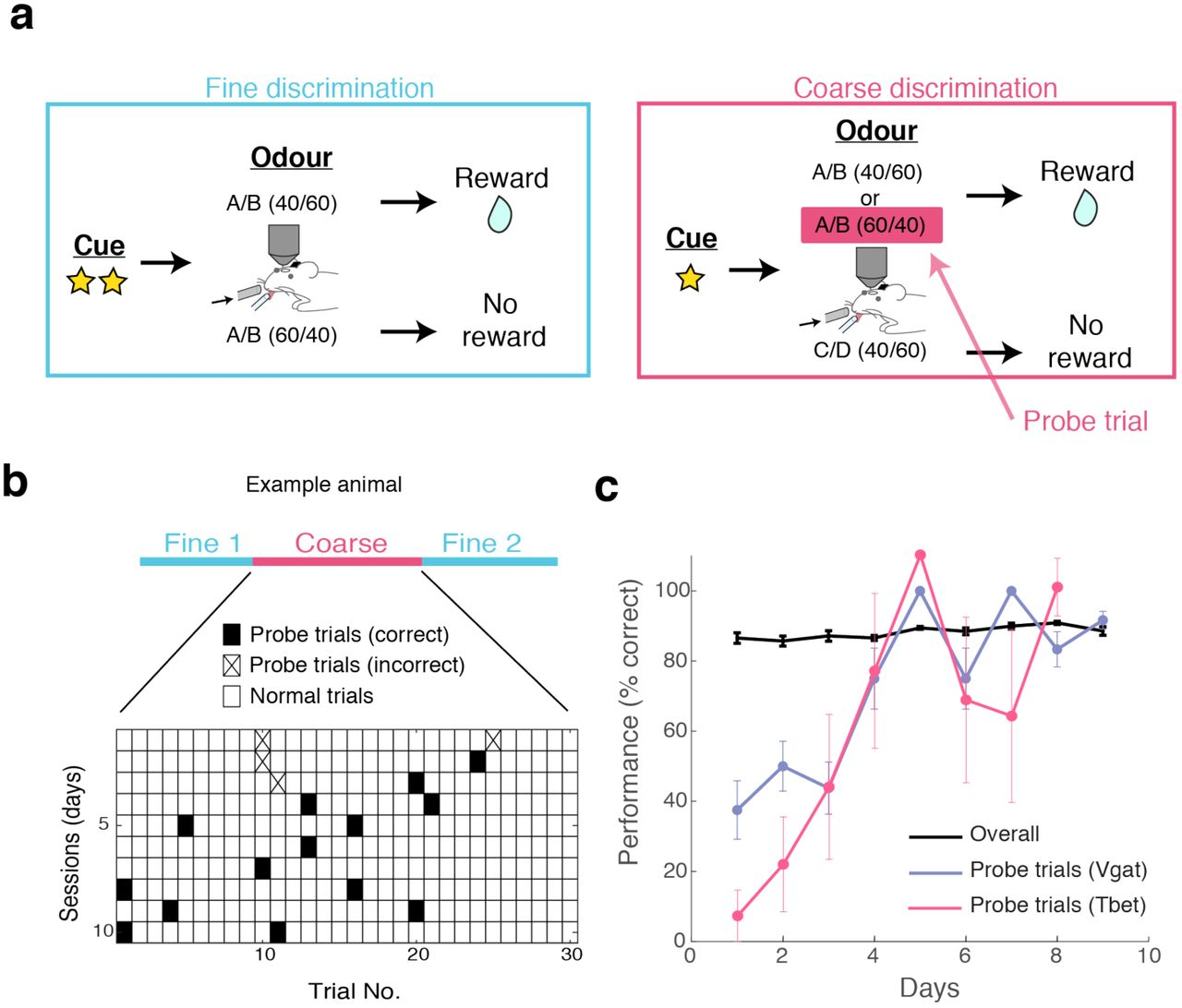 Rapid task-dependent tuning of the mouse olfactory bulb | bioRxiv