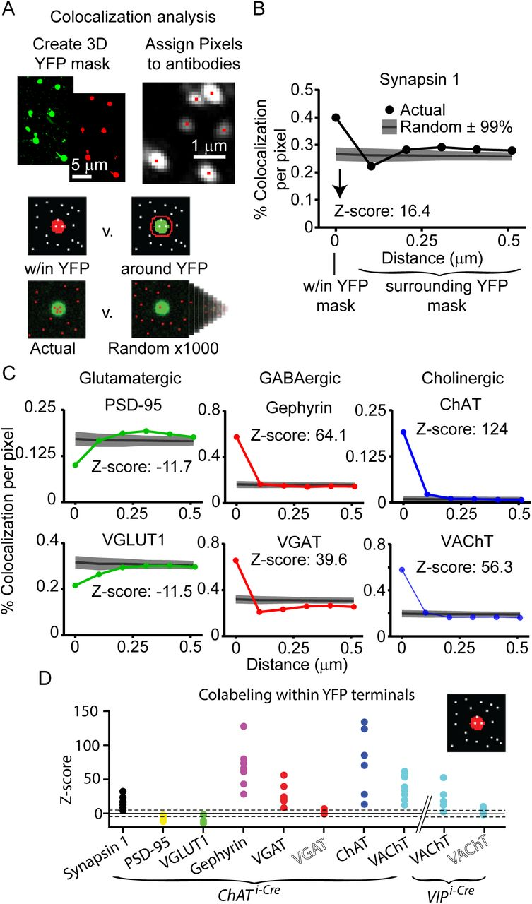 Target-specific co-transmission of acetylcholine and GABA from a