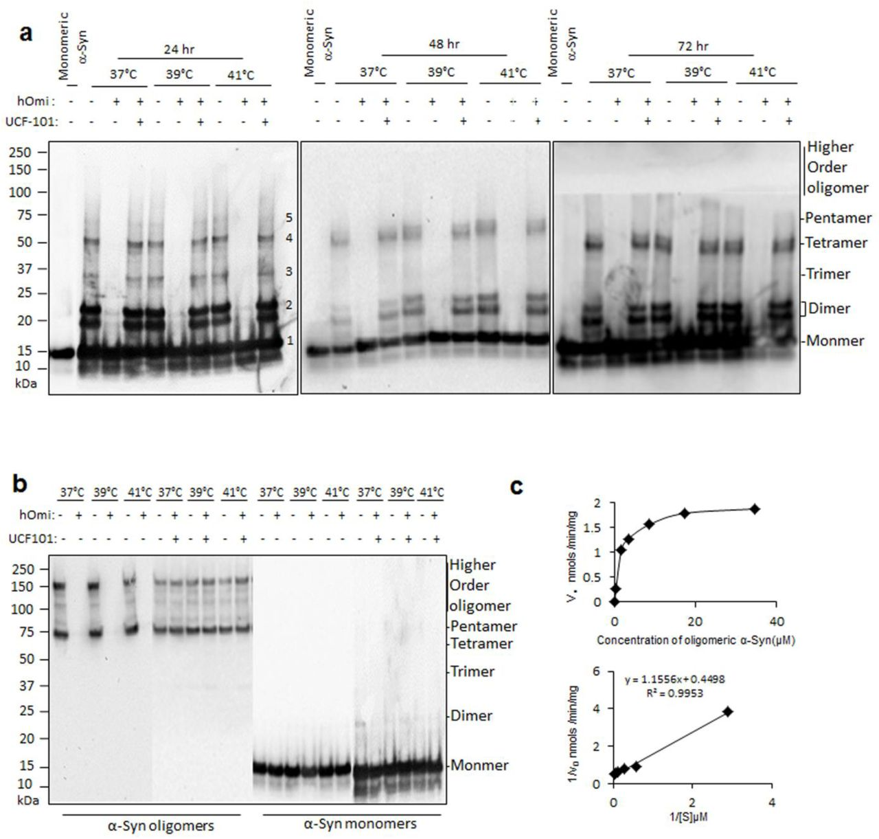 Oligomeric α-synuclein-specific degradation by HtrA2/Omi to