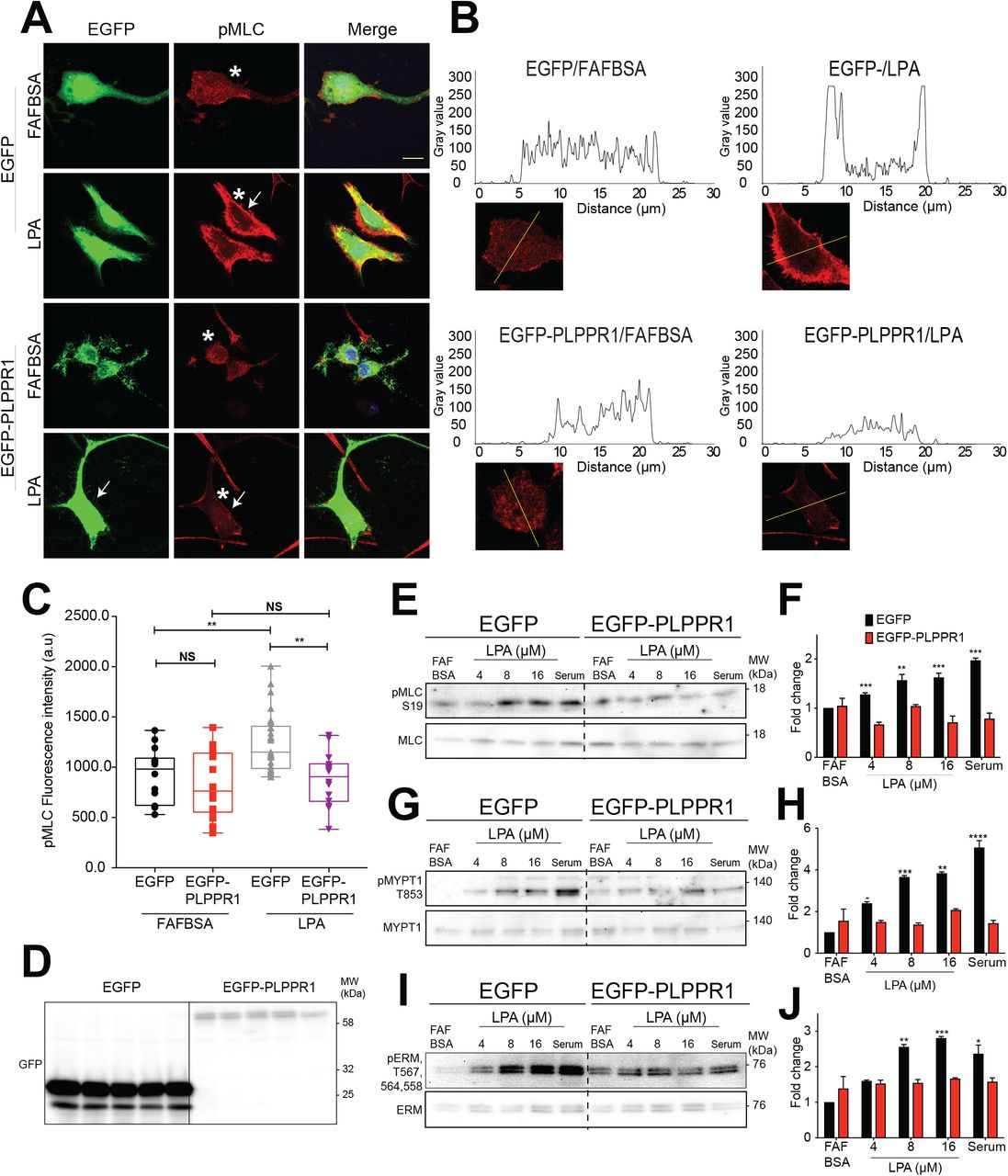 The lipid phosphatase-like protein PLPPR1 increases cell