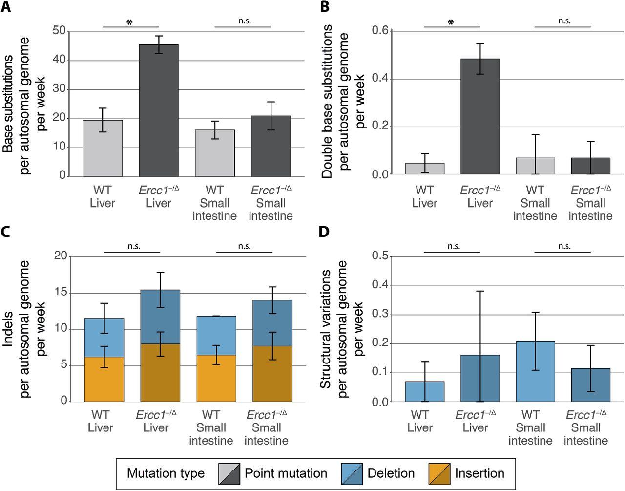 Deficiency of nucleotide excision repair explains mutational