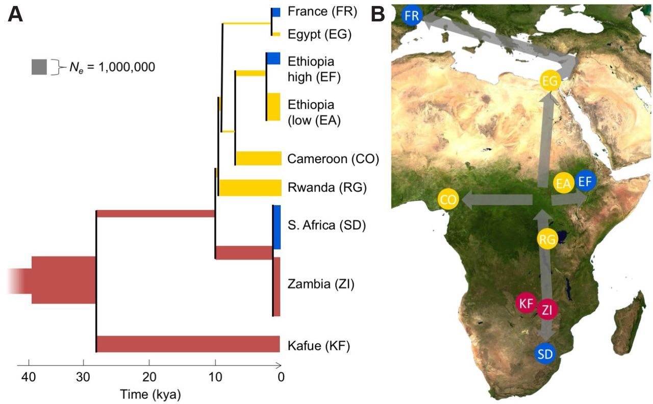 Discovery of Drosophila melanogaster from Wild African Environments