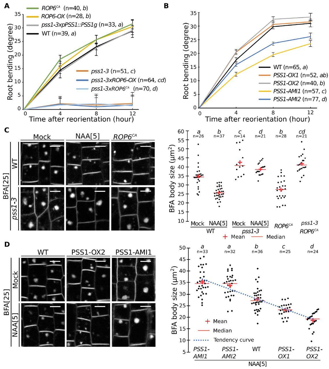 Title: In vivo phosphatidylserine variations steer Rho GTPase