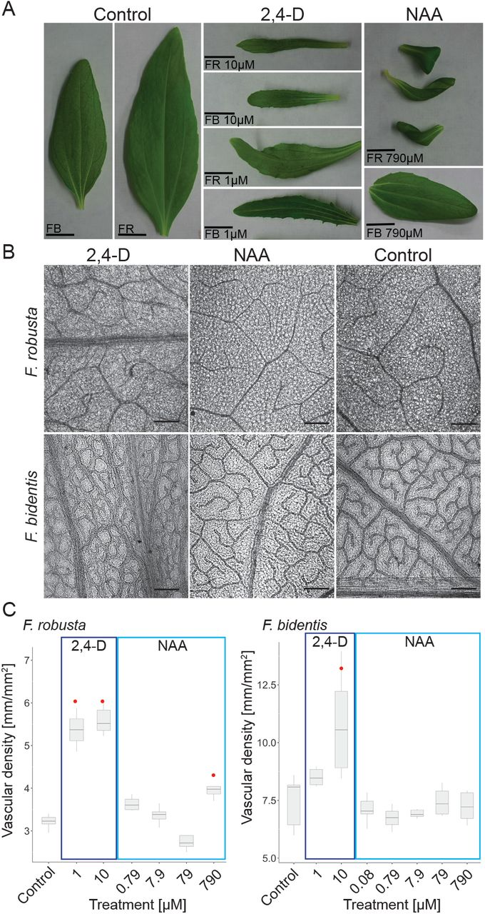 Transcriptome dynamics in developing leaves from C3 and C4