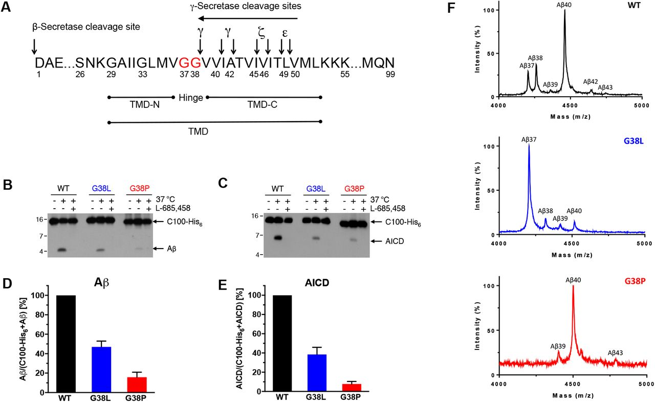 Enigmatic Chemical Tag Is Altered In >> Modulating Hinge Flexibility In The App Transmembrane Domain Alters