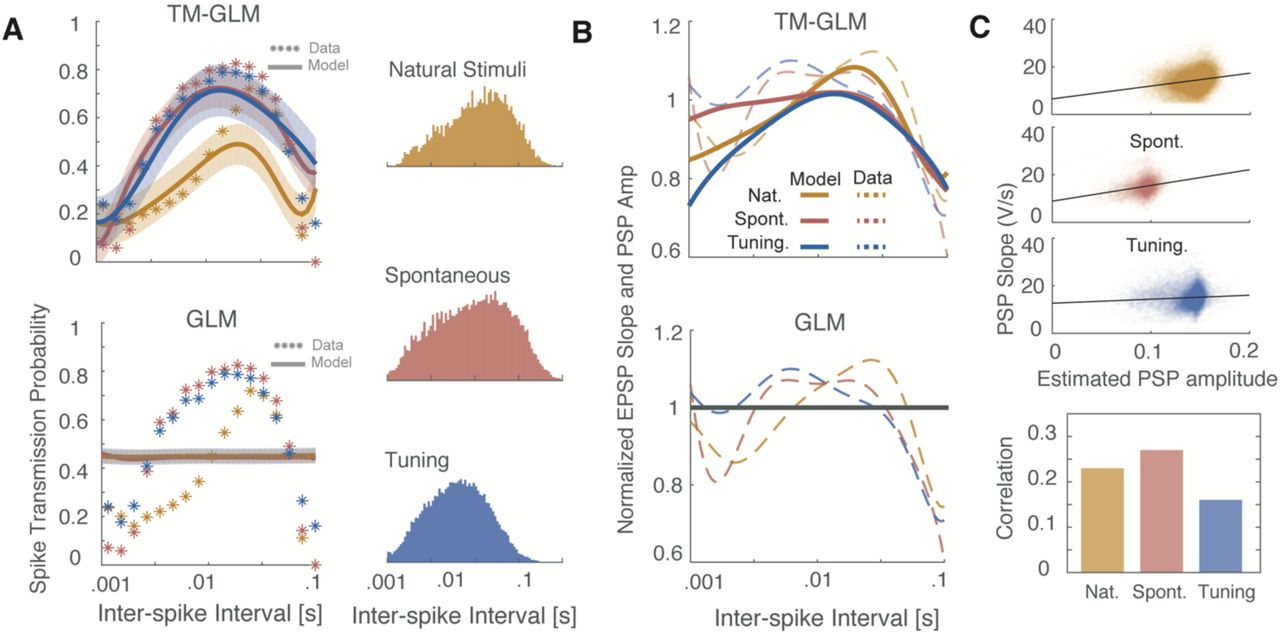 Functional connectivity with short-term dynamics explains diverse