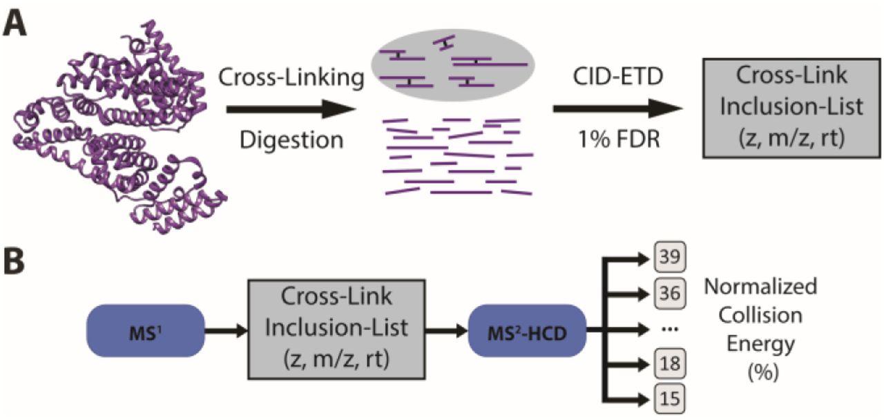 Optimized fragmentation improves the identification of