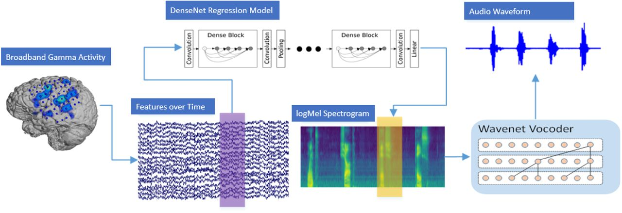 Speech Synthesis from ECoG using Densely Connected 3D