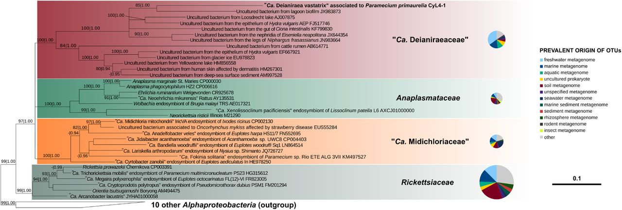 """The extracellular association of the bacterium """"Candidatus"""