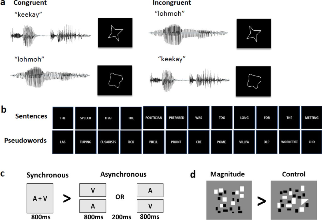 Neural Basis of the Sound-Symbolic Crossmodal Correspondence