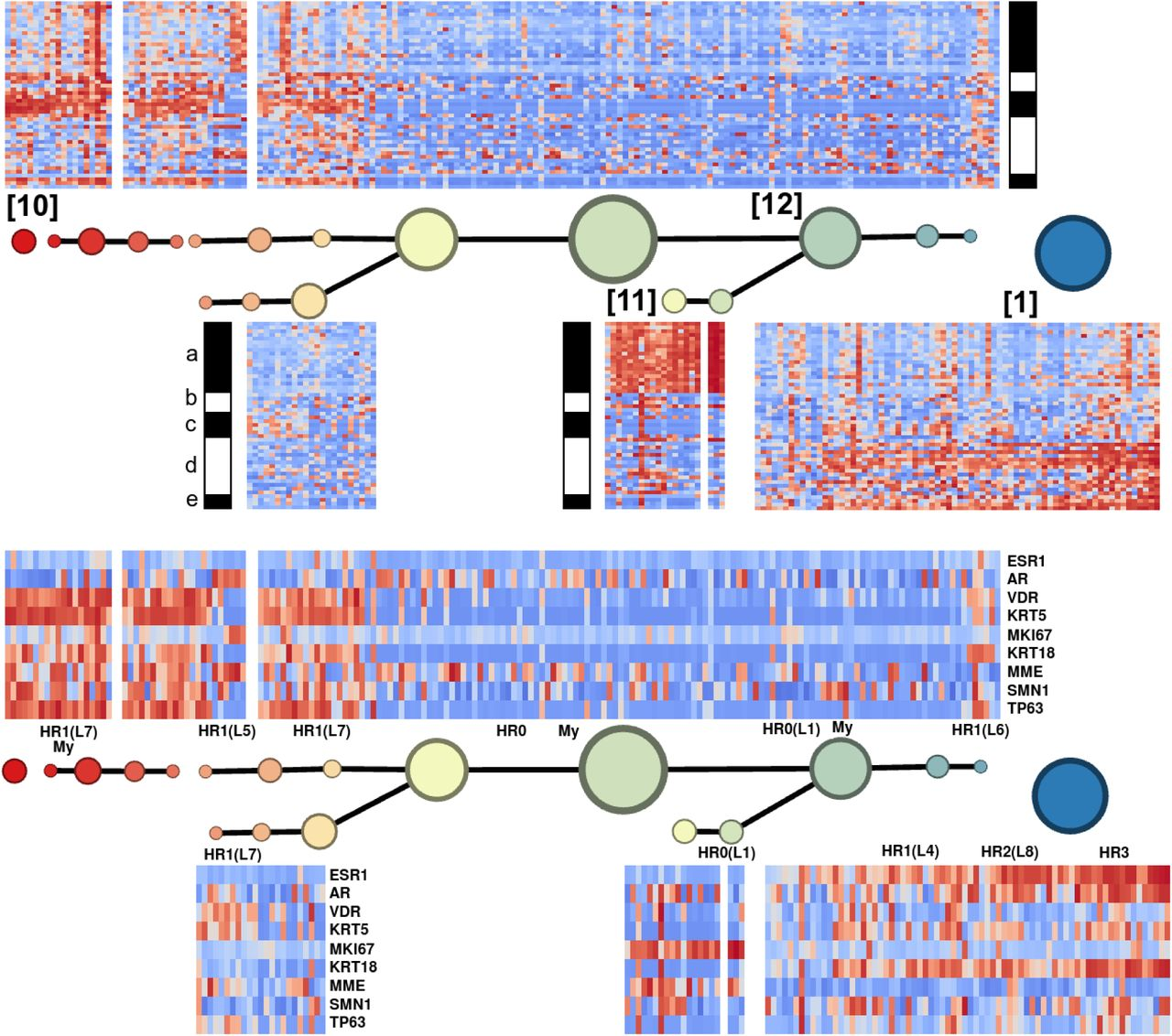 Topological Data Analysis of PAM50 and 21-Gene Breast Cancer