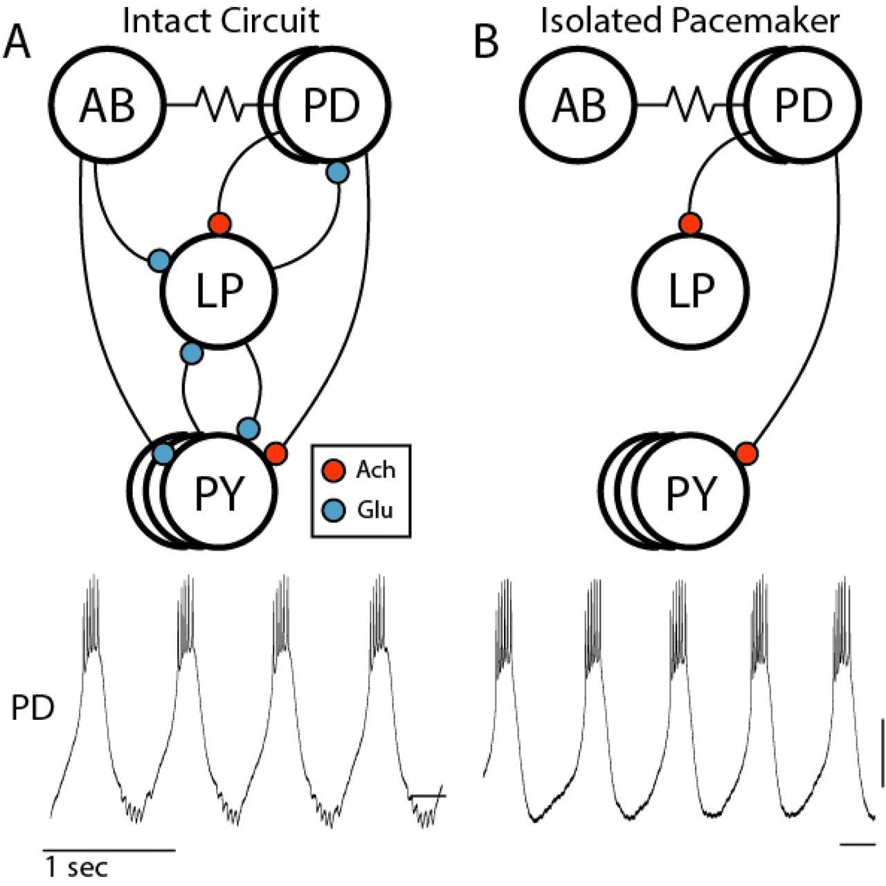 Lifier Circuit Diagram Besides Am Transmitter Circuit Moreover Simple