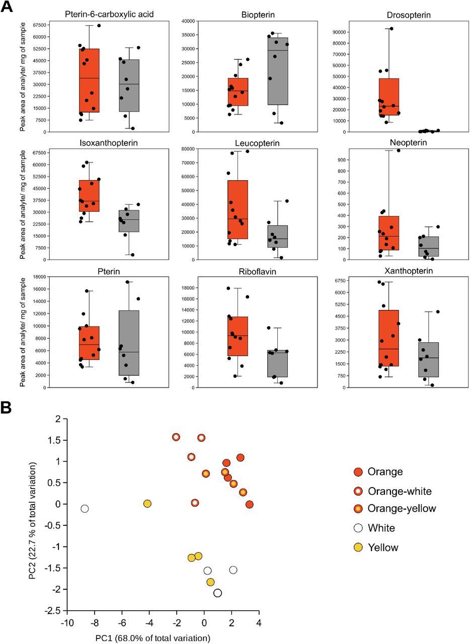 Regulatory Changes in Pterin and Carotenoid Genes Underlie
