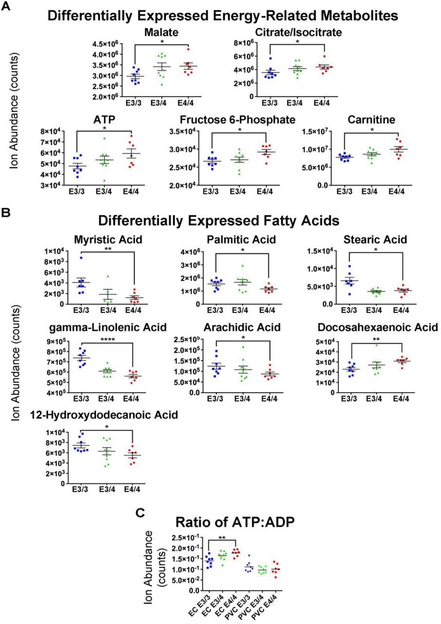 APOE4 is Associated with Differential Regional Vulnerability