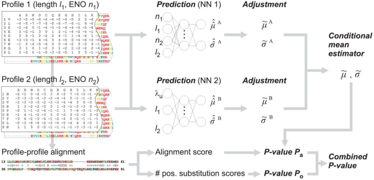 Estimating statistical significance of local protein profile-profile
