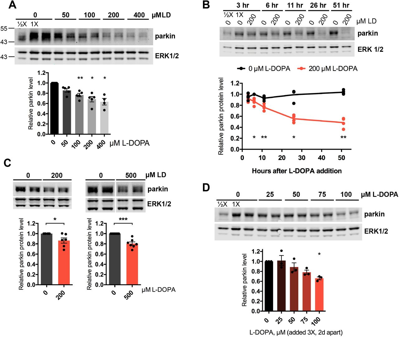 Stress-induced phospho-ubiquitin formation causes parkin