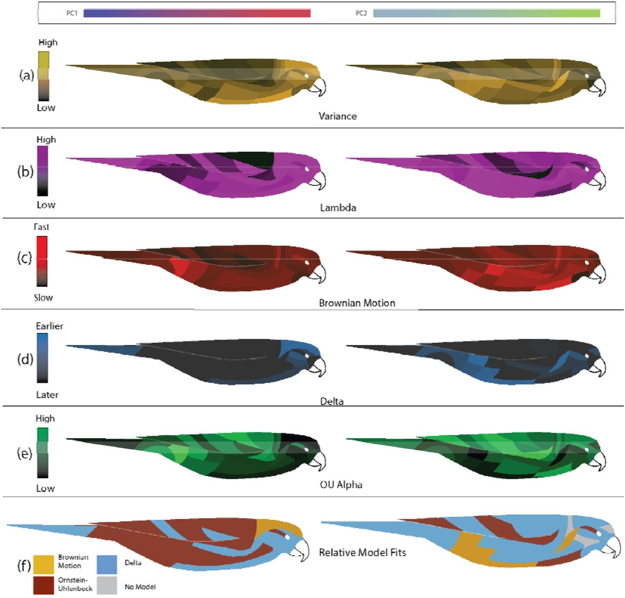 Bursts and constraints generate a rainbow in the lorikeets | bioRxiv