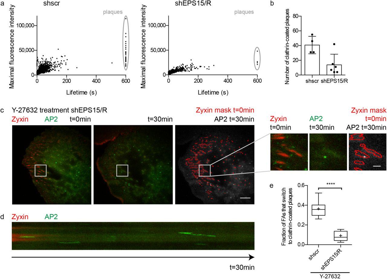 Focal adhesion-generated cues in extracellular matrix