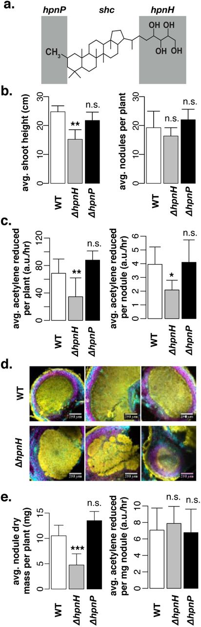 Extended hopanoid loss reduces bacterial motility and