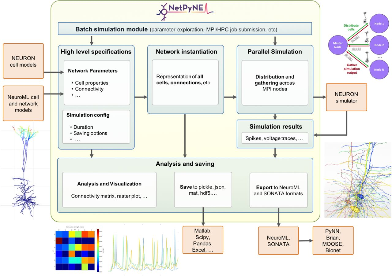 NetPyNE: a tool for data-driven multiscale modeling of brain