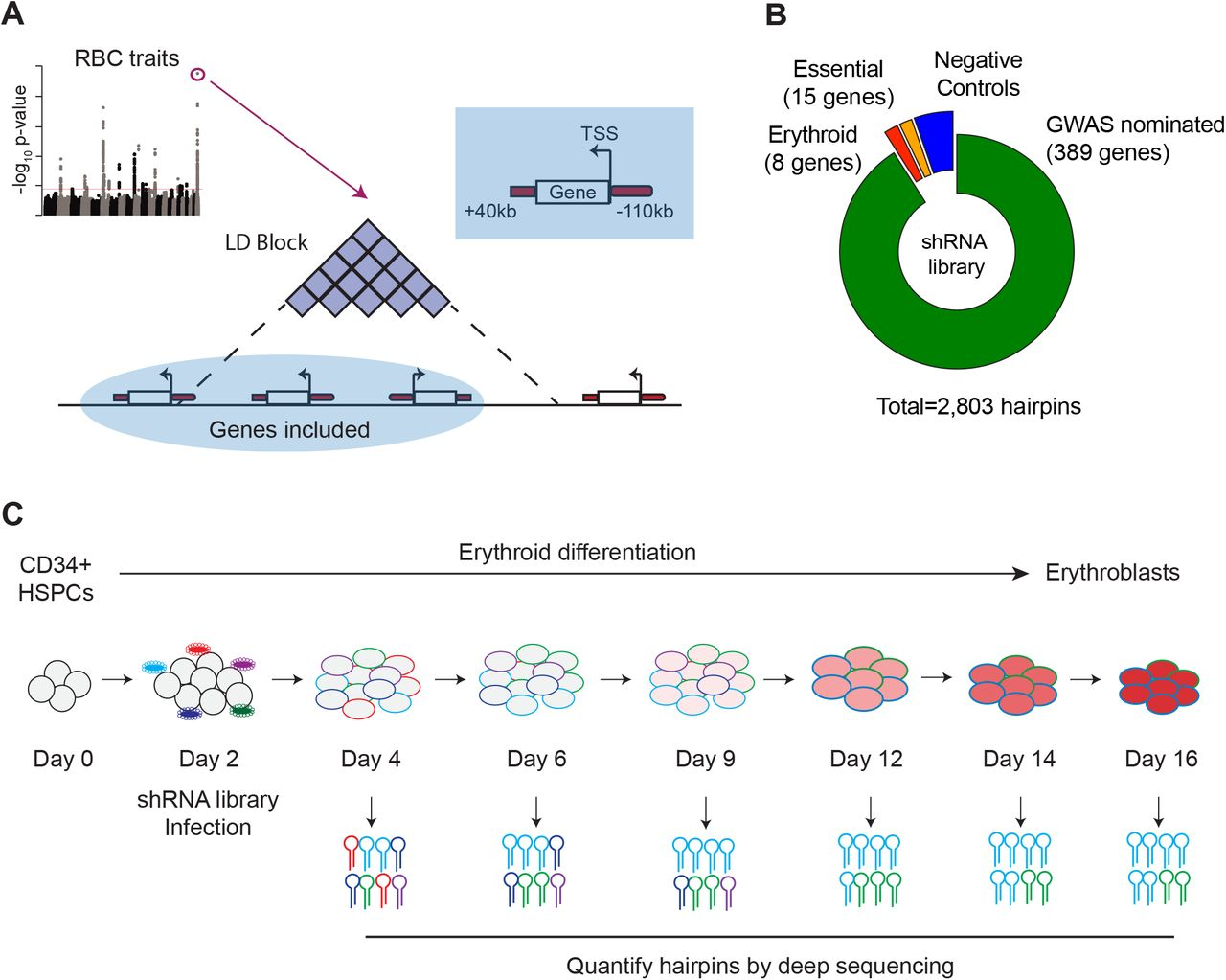 Gene-Centric Functional Dissection of Human Genetic